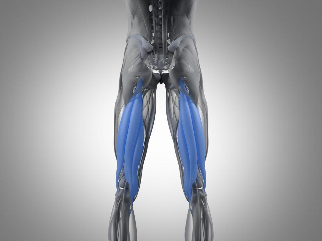 下半身の筋肉のハムストリングスについて