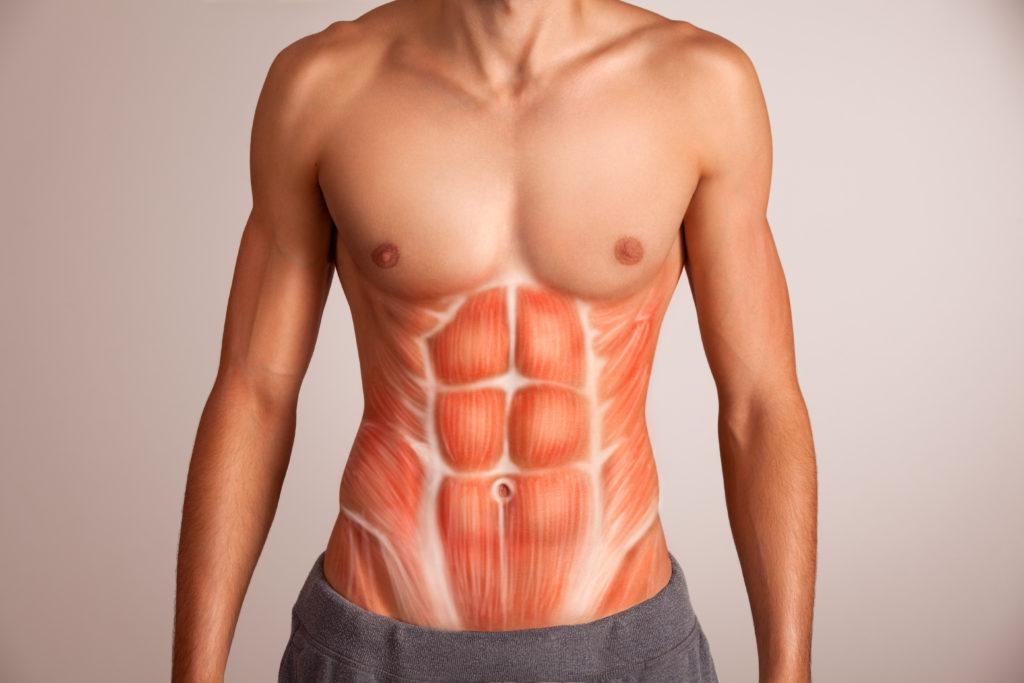 腹筋の筋肉を構成する筋肉群(腹直筋、腹斜筋)を理解する