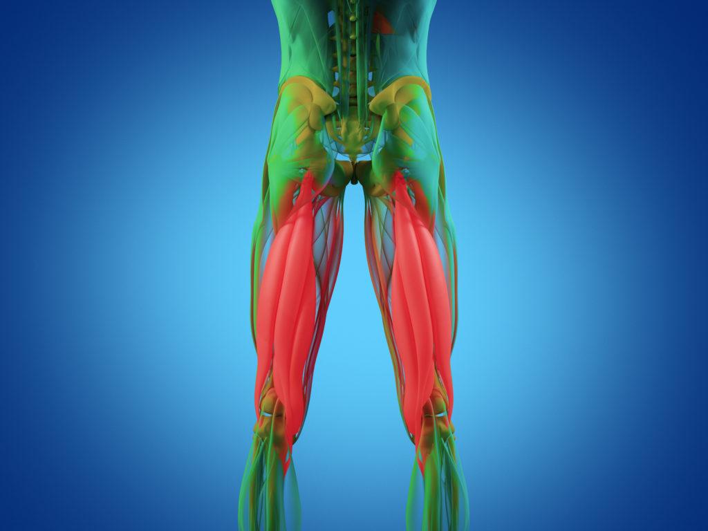 太もも(足)を細くする効果的な筋トレ方法。